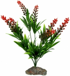 Lucky Reptile Borneo Grass with Red Flowers 30cm
